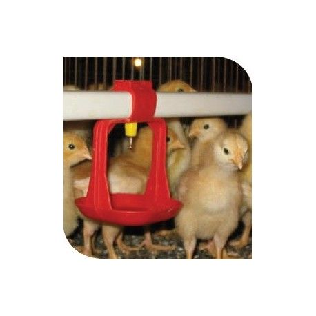 Kurczaki w zdezynfekowanym kurniku za pomocą preparatu Booster 22,6 kg